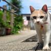 癒し系?いや、これは。『先生と迷い猫』視聴。〈ネタバレ感想あり〉(金曜日、曇り一時雨)