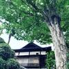 お昼寝ハープと星のお茶会  Vol.1 (10/5)