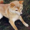 20年以上前に死んだ愛犬のことが忘れられない