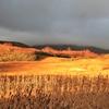 朝日に輝く竜ヶ原湿原