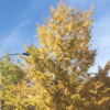 国道16号の紅葉報告 (11月18日現在)