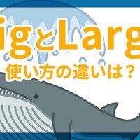 BigとLargeの違いは?Bigのいろんな使い方とそのほかの「大きい」の英語表現を紹介!