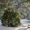 長岳寺は大和神社の神宮寺。となれば最古といわれる神社の神さまと長岳寺の仏さまは一体ということになる。
