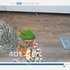 Windowsのフォトアプリで動画に字幕を挿入する