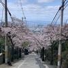 近鉄奈良線額田駅から石切駅までの桜を観てきました