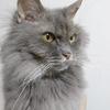 猫のための手作りご飯、基本メモ(腎臓病・慢性腎不全向け)