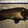 みんなの北海道釣り情報【内浦湾】根魚豊漁中!ガヤの中にソイも複数混じる