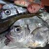 鹿児島枕崎からのお魚さん