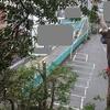 神社の木登り伐採2日目 タブの大木に挑戦