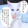 猫と私と本音脳内メーカー