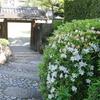 ぶらり 街中 撮り歩く 都会の中の日本庭園 相楽園