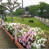 五島市(福江島) 外濠公園のツツジと藤