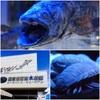 憧れの沼津港深海水族館へ行ってきました