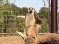 想像以上に広くて時間が足りなかった「よこはま動物園ズーラシア」