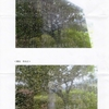 【早稲田の湯・スペインの太陽】昨年の12月末から依頼していた、私の宮城県職員初担当地区であった完工記念碑から、私の名前が削除され消滅を画像で確かに確認しました【相撲温泉・大相撲  白鵬】