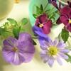 キッチンの花&お昼寝金魚♪