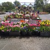 鳥取花回廊  花と緑