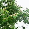 私と私の闘病記録 庭の木の花を眺めつつ思うこと