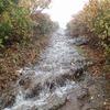 宮城県)いわかがみ平→中央コース→栗駒山(雨、登山道水量多く断念)