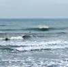 SEA LOVE SURFBOARDSのカスタムオーダーについて