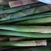 タケノコなどの山菜採りに適した装備