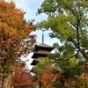 東寺の紅葉と五重塔、見頃まだあと少し【2019/11/17】