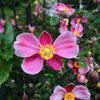 高崎公園周辺散歩 シンフォニーガーデンの花達・今朝の空