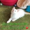 🐱神戸アニマルリンク情報🐱