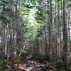 猛暑から逃げひんやり苔の森へ