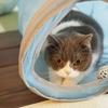 キャットトンネル、それは猫の秘密の隠れ場所