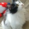 うちの猫、よつばちゃんがうちに来たいきさつ。