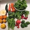 野菜嫌いのおうちコールドプレスジュース 糖質19g、120kcal コップ1杯の美味しい野菜ジュース