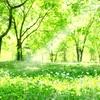 癒しの基本は、まず自分。~氣とエネルギー変換~