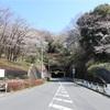 多摩川桜百景 -40. 中央大学-
