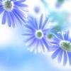 不妊治療振返り⑤東邦大学医療センター 大森病院 リプロダクションセンター(婦人科)での治療 (その4)~体外受精 篇~