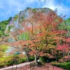 御船山楽園の紅葉【佐賀】