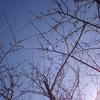 桜の咲き始めって、いつだったんだろう?海の公園3月24日を振り返り☆(沼津市)