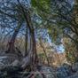 龍の潜む谷へ 2 名栗川源流・有間谷の森と渓