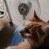 扇風機を大掃除
