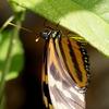 美しい蝶と優秀なレンズ
