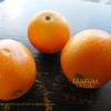 金柑(きんかん)Fortunella Kumquat