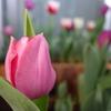 中国からの便り、春