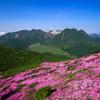 【登山記】 九重連山 初夏の平治岳を染めるミヤマキリシマのお花見登山