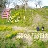 ドローン 空撮 『桜の前に菜の花畑』DJI Mavic pro Japan 日本