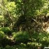 まぐろきっぷで満喫、三崎旅☆ 小網代の森~白秋碑前