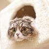 猫がびっくりした時にフリーズするのはなんで?