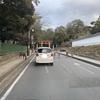 車道を堂々と通る鹿