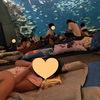 子供が小学生になったら 絶対お勧め!【夏休み】水族館ナイトステイ in 鴨川シーワールド