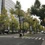 大阪 秋の御堂筋