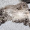血液検査で数値が下がった!(BUN、クレアチニン、リン)猫の慢性腎不全